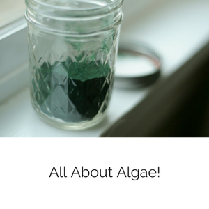 allaboutalgaeblog300.png